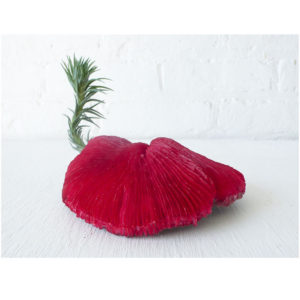 Red Mushroom Coral Creature w. Live Air Plant Tail