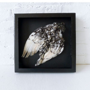 Silver Seabright Full Chicken Feather Shadow Box