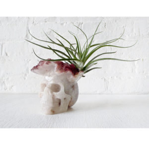 Giant Quartz Crystal Carved Skull with Druze Blood Crown and Air Plant