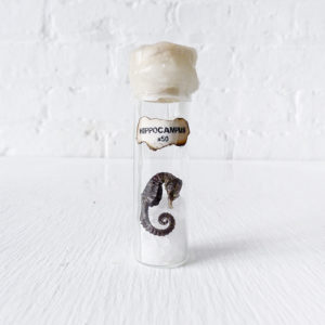 Real Sea Horse Preserved in Sea Salt and Wax Sealed in Glass Cork Vial
