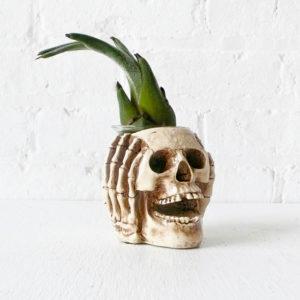 Scary Skull Air Plant Garden