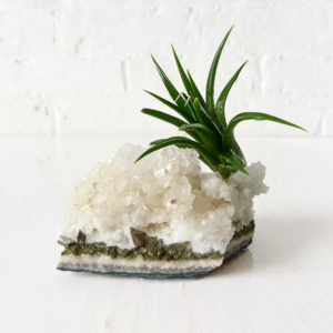 Air Plant on India Crystal