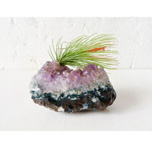 Air Plant on Large Amethyst Geode Crystal Garden