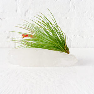 Quartz Crystal Point Air Plant Garden with LIVE Plant