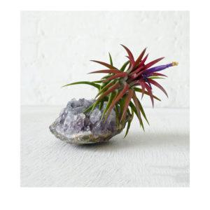 Amethyst Garden Bloom