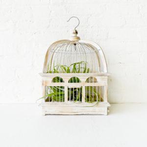 White Wash Bird Cage Air Plant Garden