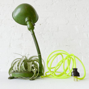 Green Foot Live Plant Lamp – Vintage Industrial Gooseneck Light with Neon Cord and Live Air Plant