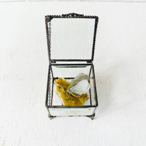 Sleeping Zanna on Gold Citrine Quartz in Beveled Glass Jewelry Box – Spotted Fly