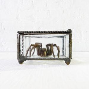 Beveled Glass Jewelry Box with Tarantula Taxidermy