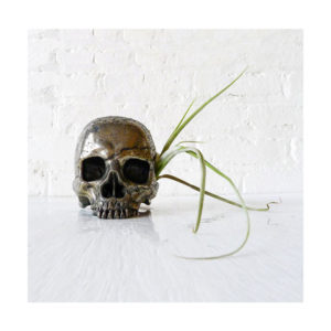 Goonie Gold Skull – Pyrite Carved Crystal Skull Air Plant Garden