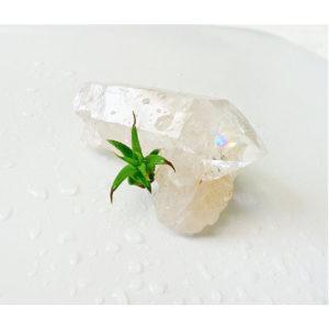 My lil Magnet Raw Quartz Crystal Point w/ Air Plant Garden