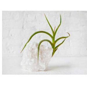 Crystal Quartz Tall Air Plant Garden - Home Garden Terrarium