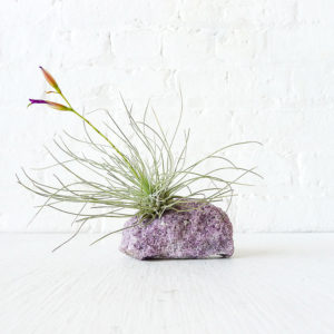 Pretty Mica Crystal LIVE Air Plant Garden