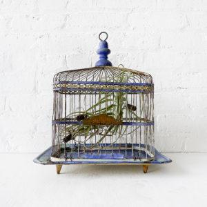Air Plant Garden in Distressed Blue Green Bird Cage