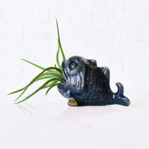 Black Fishy Moby Cindy Creature with LIVE Air Plant – Koi Fish