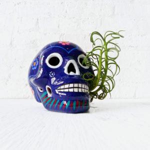 Giant Dia De Los Muertos Skull with Live Air Plant