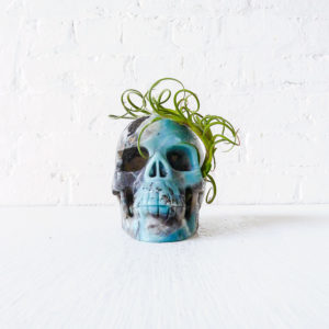 Ocean Carved Skull with Air Plant Headdress