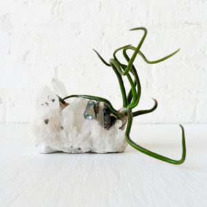 QUARTZ and SPHALERITE Crystal LIVE Air Plant Garden