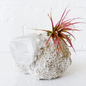Space Square Island of Pink Plants – Air Plant Crystal Garden