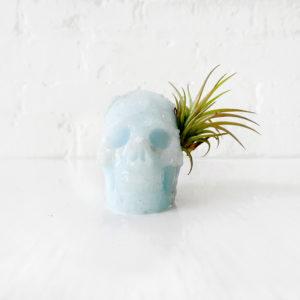 Tribed Blue Boy – Aragonite Carved Skull Air Plant Garden