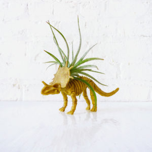 Triceratops Air Plant Garden
