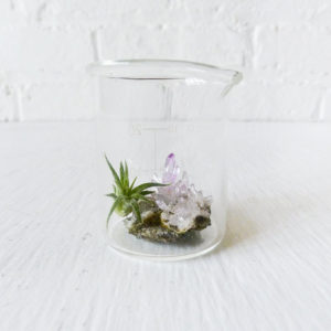 Mini Tiny Science Beaker with Magic Matrix Quartz Air Plant Planet Live Inside