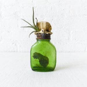 Burrowing Owl Skull Vintage Medicine Bottle - Air Plant - Antique Ink Collection