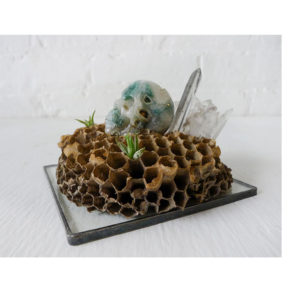Air Plant Pup Garden - Nome King Ocean Jasper Skull with Crystal City on Honey Comb