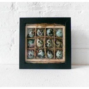 Real Quail Egg nest Crate in Shadow Box